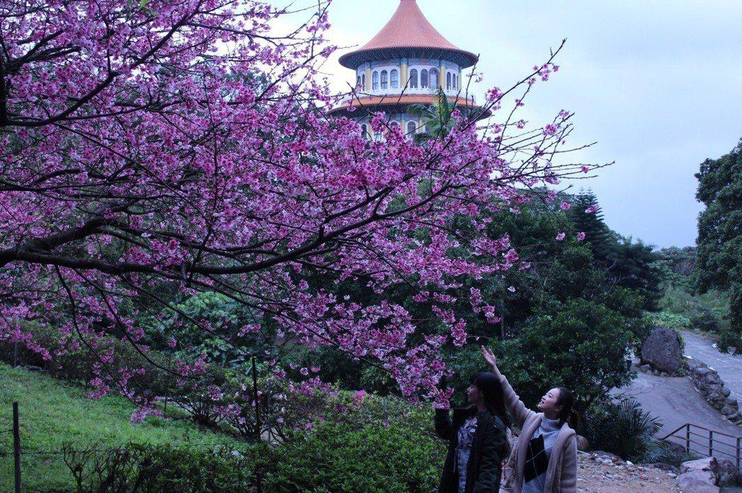 淡水天元宮可稱為北台灣的賞櫻勝地。福容大飯店/提供