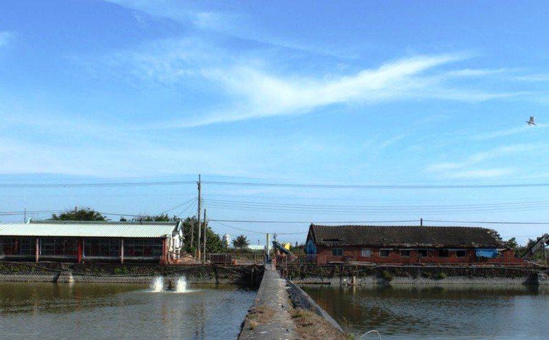 荒廢20年的魚塭重現生機。 攝影/許庭瑜
