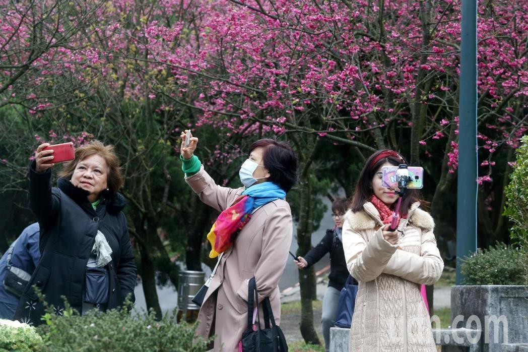 陽明山花季明天登場,將舉辦到3月17日共31天。圖/聯合報系資料照片