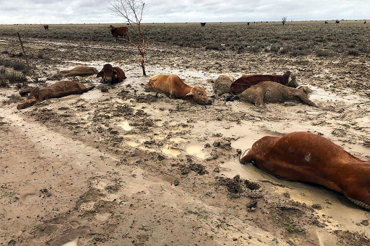 經歷七年乾旱的澳洲昆士蘭省西北近日降下暴雨,引發當地史上最慘重的洪災,這張攝於8...