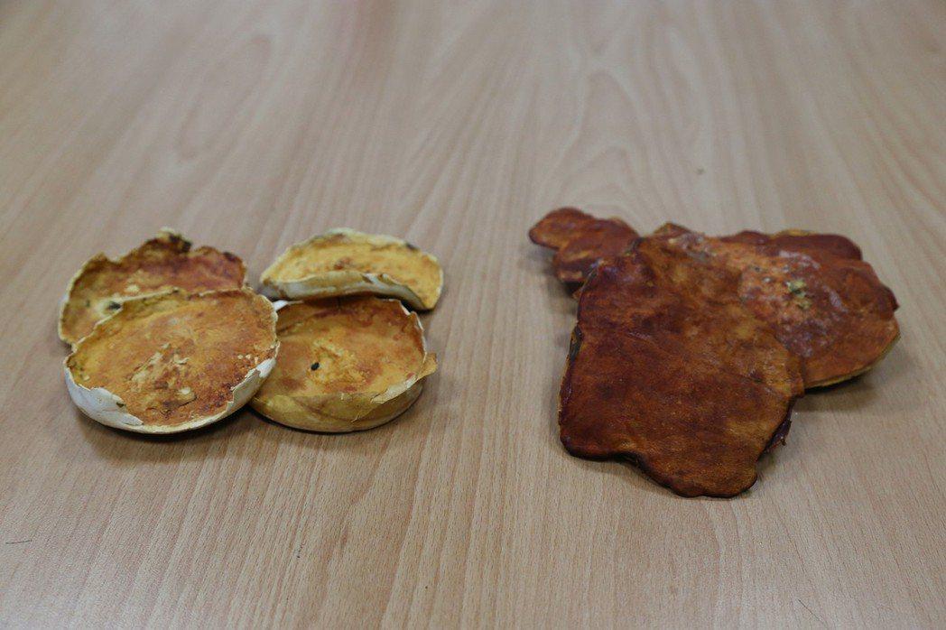 左邊是皿培式子實體牛樟芝,右是牛樟段木培養牛樟芝子實體。圖/興大提供