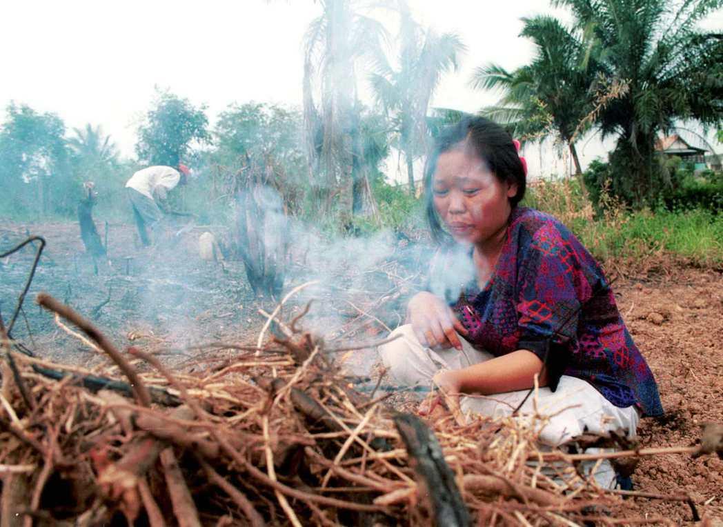 女子在自家農地上焚燒枯枝。 (路透)