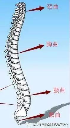 脊柱存在四個生理曲度。