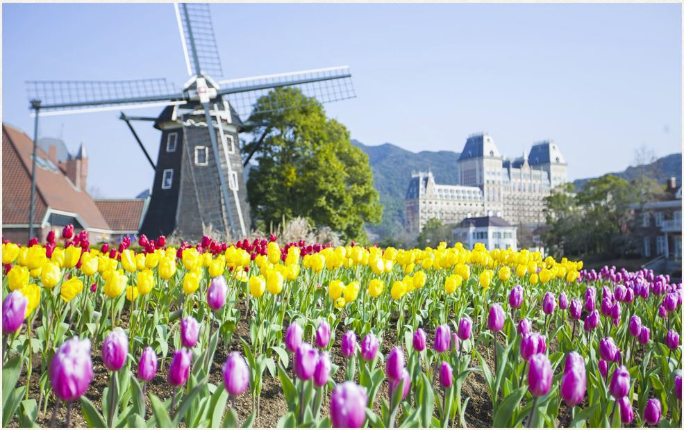 豪斯登堡擁有風車等元素,配上鬱金香花海,宛若身處荷蘭。圖/擷取自豪斯登堡官網