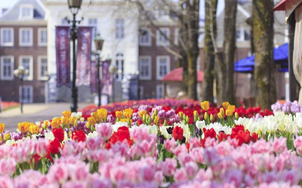 在3月16日至4月7日的特別週期間,可以一次欣賞到700種鬱金香。圖/擷取自豪斯...
