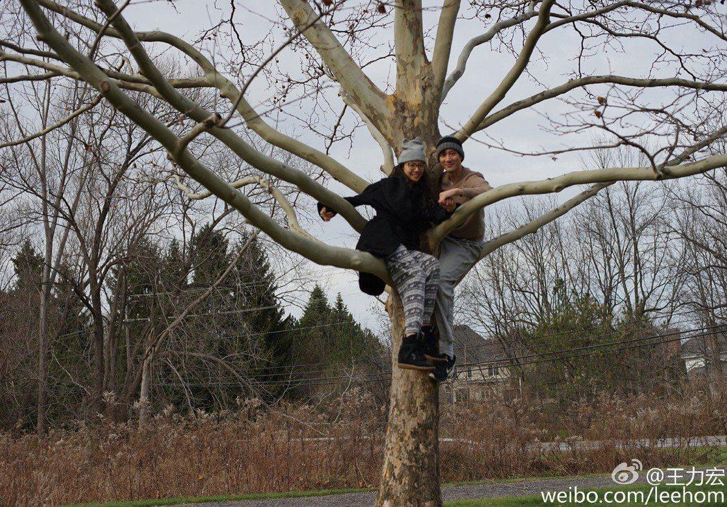 王力宏(右)4年前跟老婆李靚蕾在紐約爬樹。圖/摘自微博