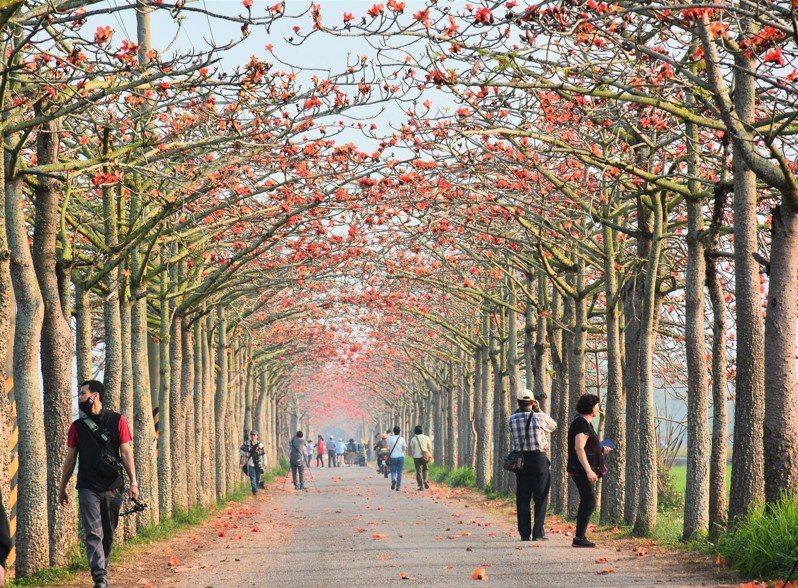 台南白河林初埤木棉花道曾入選亞洲最美花海街道。記者吳淑玲/攝影