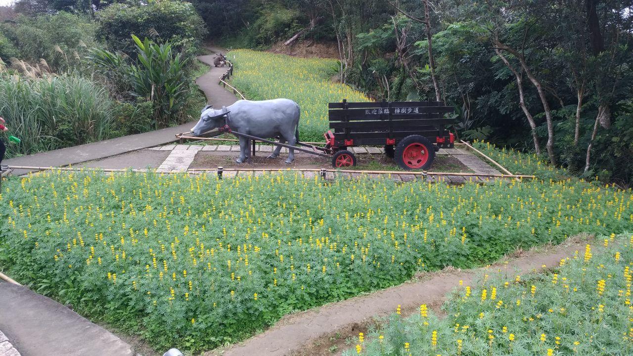 樟樹步道上可見到牛車等農村復古元素。圖/取自台北市政府大地處官網