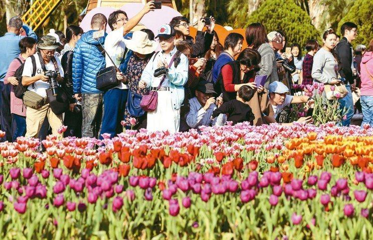 士林官邸鬱金香展即將在2月21日開跑,去年活動期間正值年假,吸引大批遊客前往。圖...