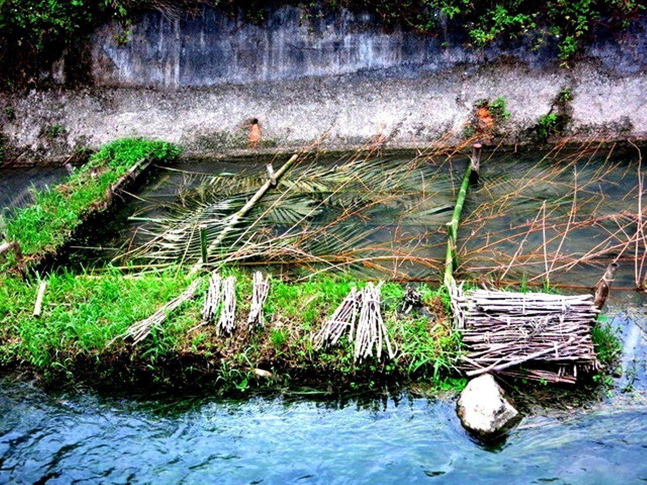 Palakaw─巴拉告傳統捕魚技藝工法。 圖/台中市原民會提供