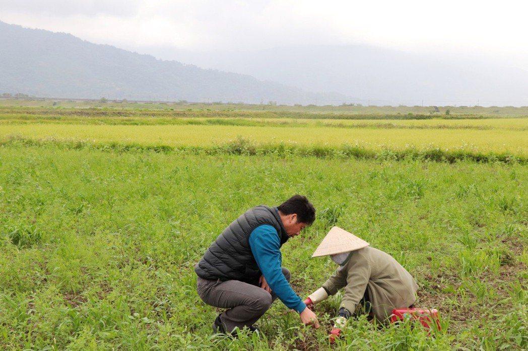 公頃的農田,除了老農外,近年也有年輕農夫、外籍配偶一同耕作,將農田注入新力量。攝...