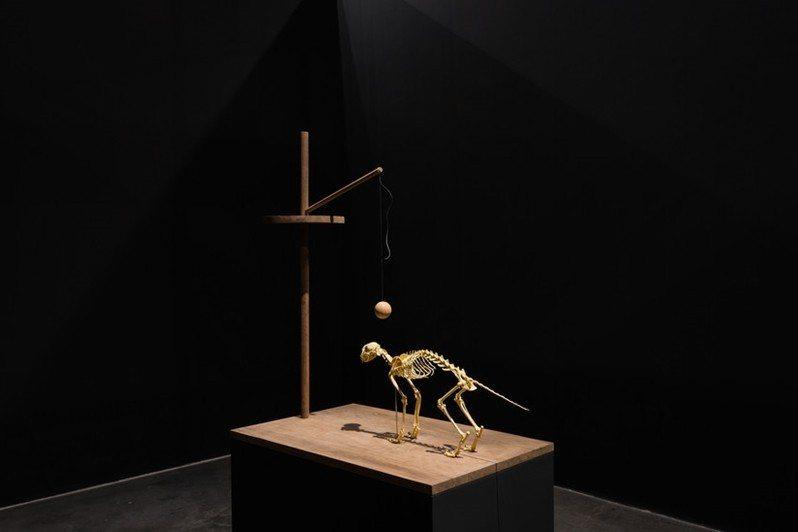 趙仁輝作品,〈紀念聖誕島上的最後一隻貓〉。 圖/截自香格納畫廊官網