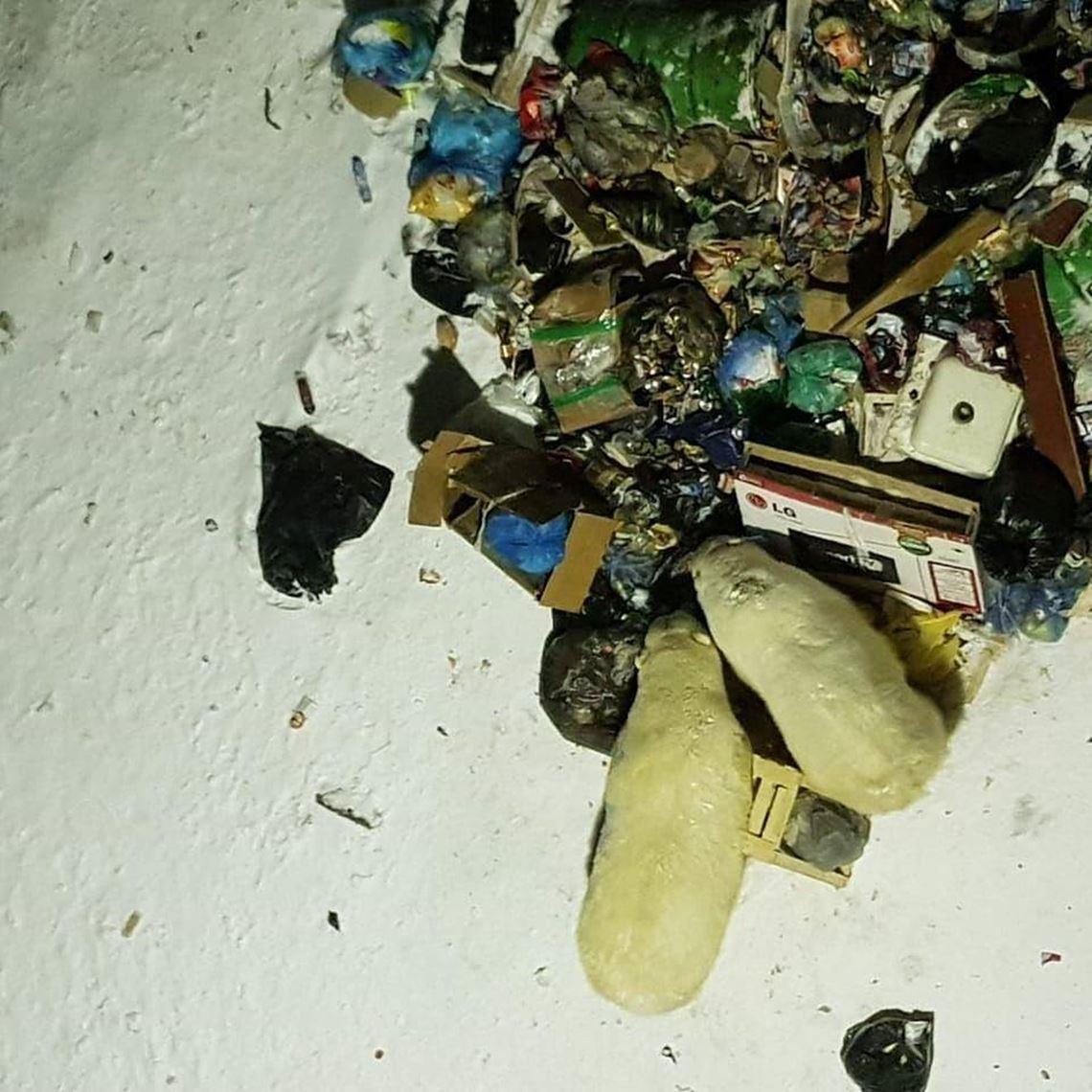 在各種目擊影片中,民眾也發現了熊群在垃圾山裡打滾、翻找廚餘的難過畫面。 圖/居民...