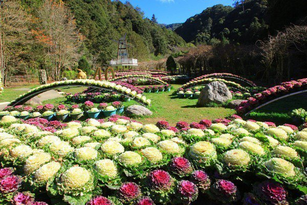 杉林溪森林生態度假園區種植大量花卉,目前為鬱金香花季,預計到2月底結束。圖/摘自...
