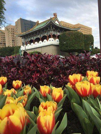 景福門四周種植大量鬱金香。圖/台北市政府工務局公園路燈管理處提供
