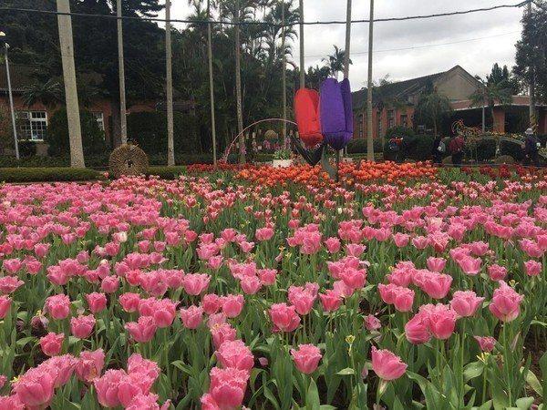 2019士林官邸鬱金香展在2月21日起開跑。圖/台北市政府觀光傳播局提供