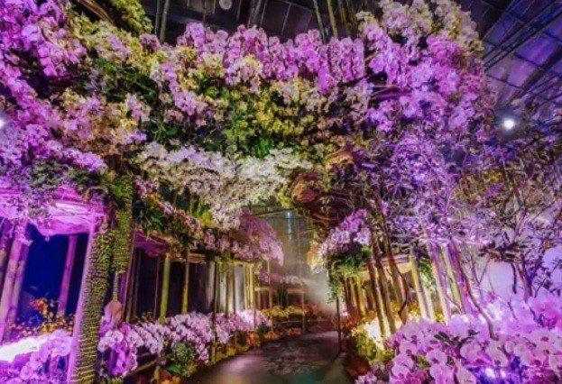 台灣國際蘭展將在3月於台南蘭花生物科技園區登場。(photo by 台灣國際蘭展...