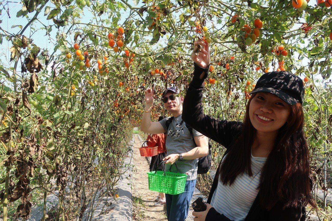 高雄一日農夫提供全年的採果體驗以及客製化的遊程很有潛力。記者謝梅芬/攝影