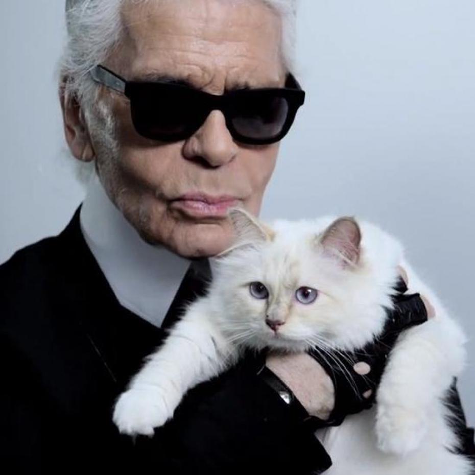 拉格斐的愛貓邱比特接拍廣告,擁有忠實粉絲,猶如國際巨星。圖/擷自臉書