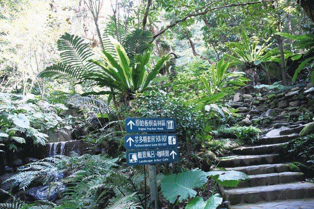 沒時間出國,可以就近到三峽大板根享受亞熱帶雨林的洗禮。 圖/陳志光