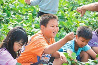 示意圖。雲林一群孩子參與體驗課程,拉近與土地之間的距離。圖/報系資料照