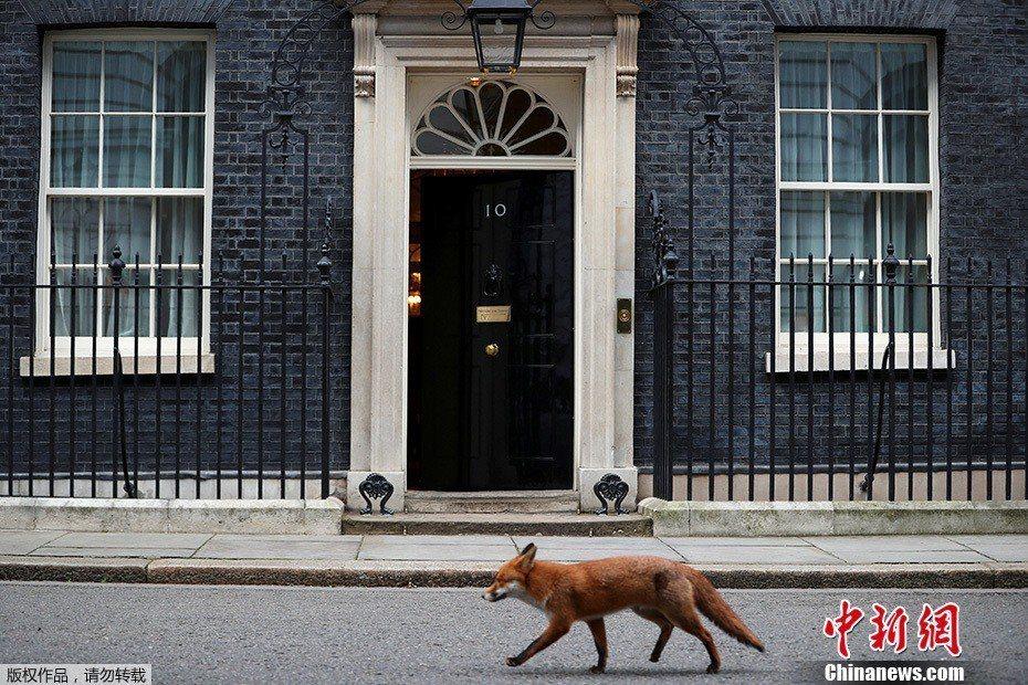 唐寧街10號(英國首相官邸)。圖/中新網