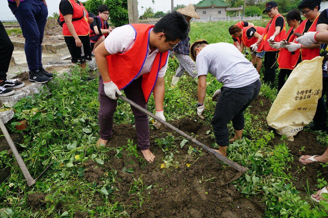 假日到溪口鄉柴林村免費體驗挖地瓜。圖/柴林腳基金會提供