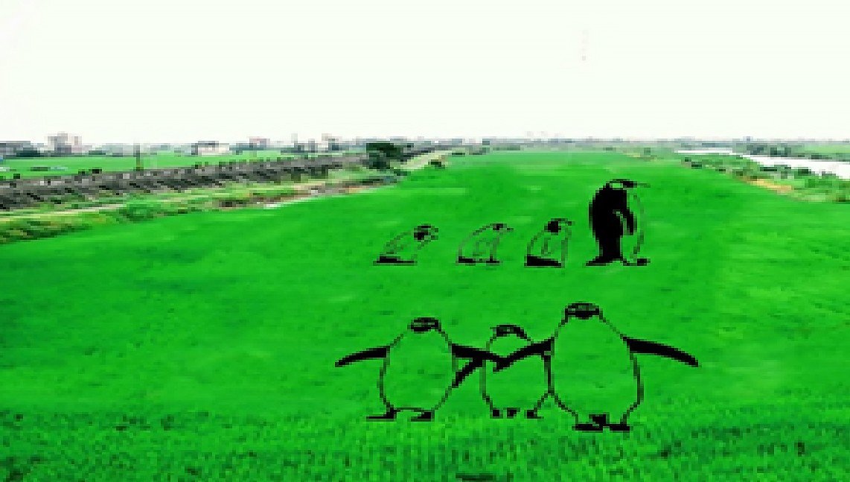 宜蘭縣壯圍鄉公所今年要在近千坪農田裡種出一群企鵝,圖為壯圍鄉公所提供的模擬圖。圖...