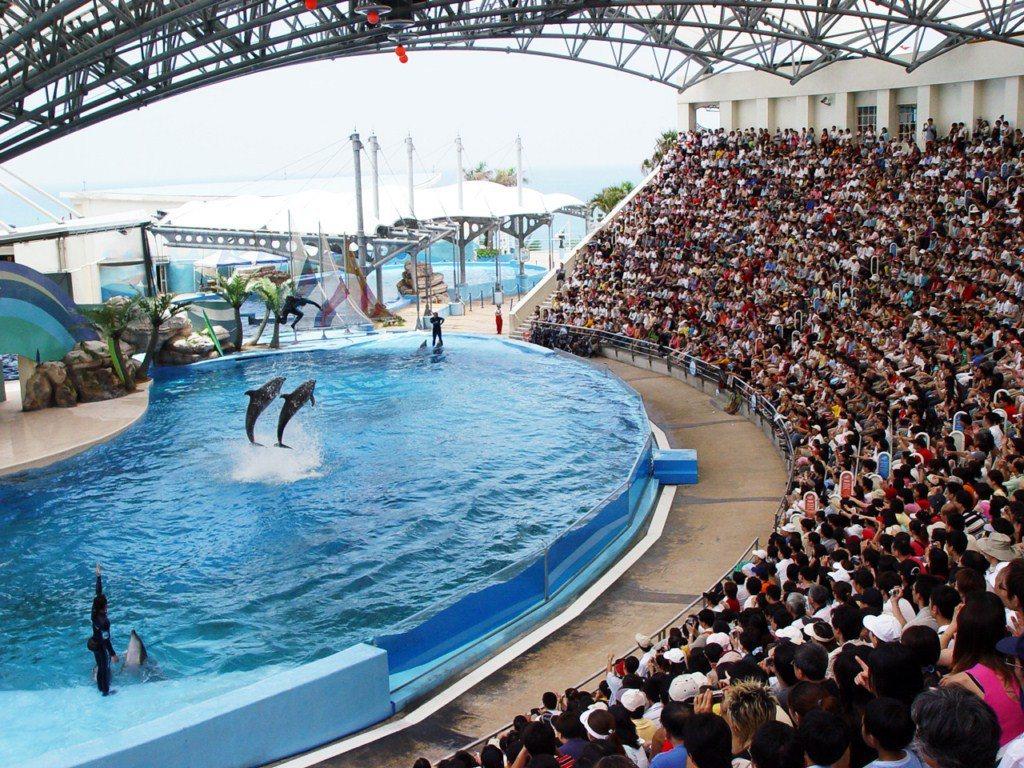 花蓮遠雄海洋公園有可愛的海洋動物表演,很受孩子歡迎,228連假推出兒童優惠票價。...
