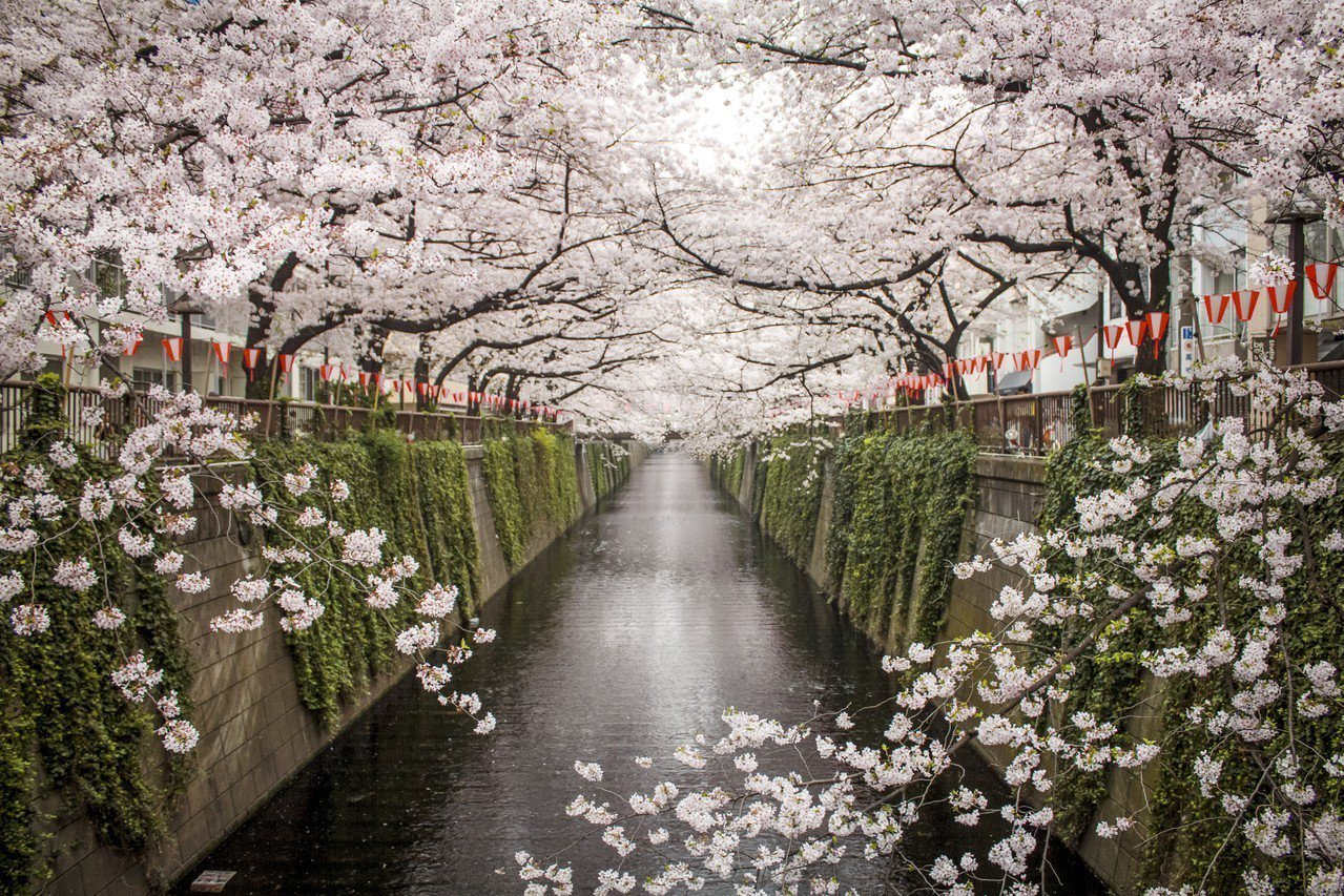 根據「日本氣象協會」開花日期預報,東京櫻花可望於3月25日綻放。圖/Airbnb...