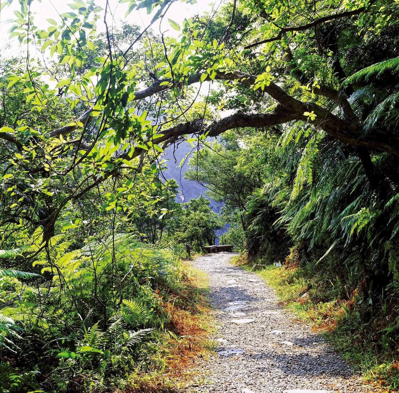 跑馬步道沿途為低海拔森林生態環境,林相完整豐富。圖/林務局羅東林區管理處提供