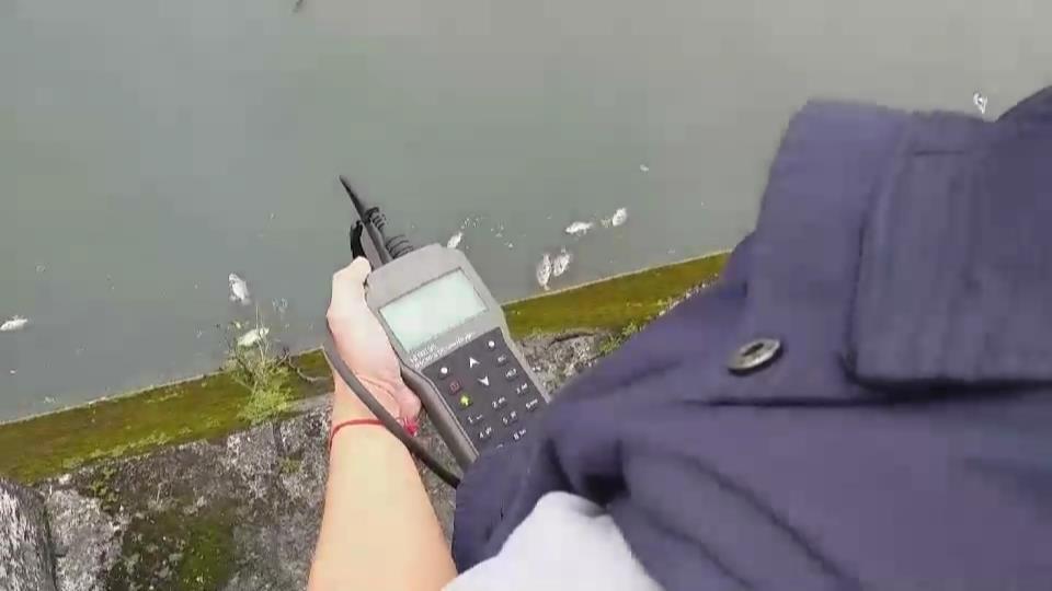 宜蘭縣環保局檢測發現,應該水中溶氧量過低,讓魚缺氧而死。圖/民眾提供