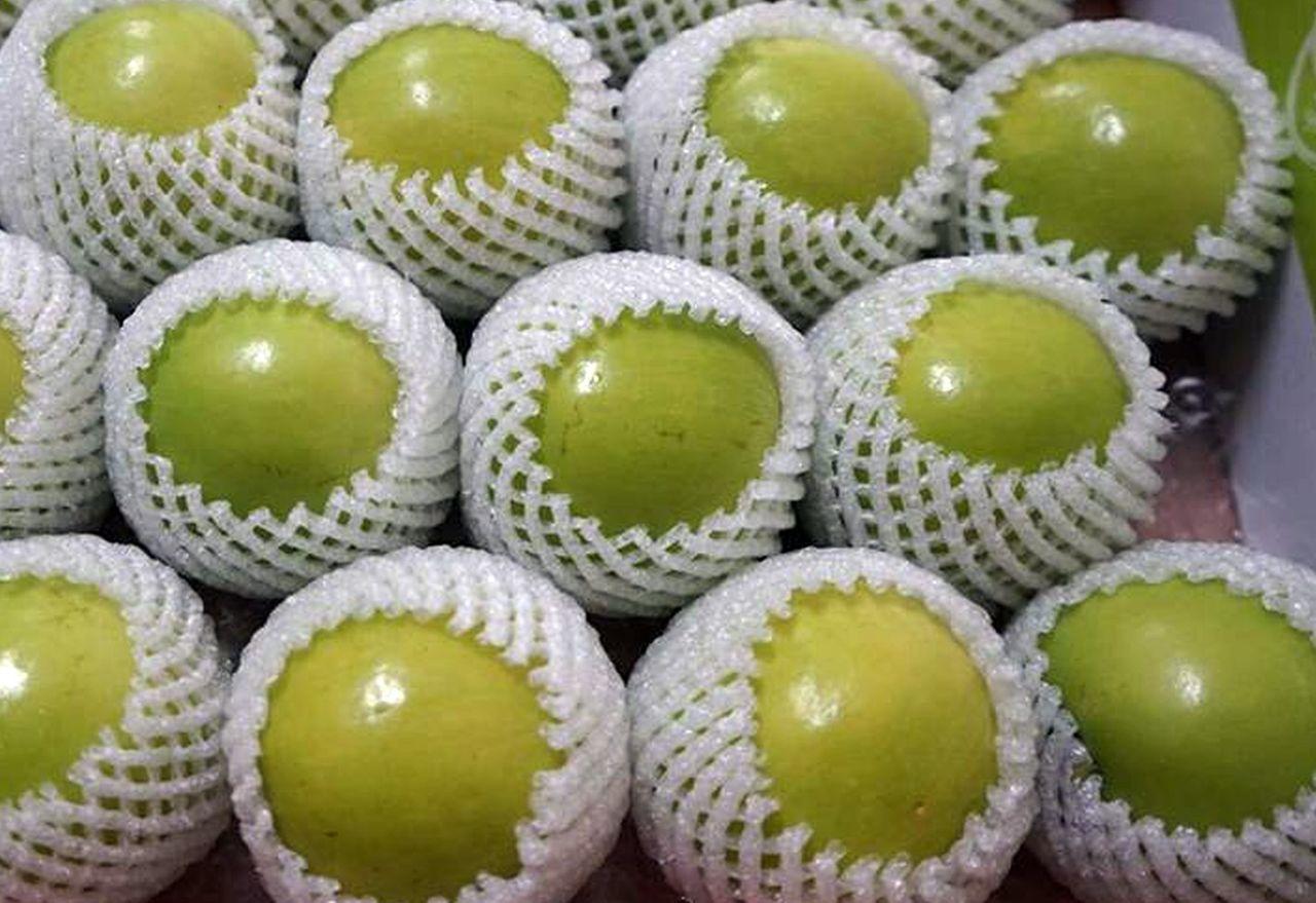 珍蜜11號蜜棗皮薄多汁,素有「爆漿蜜棗」美稱。記者王昭月/攝影