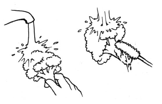 ●花朵部分朝上沖水●使用流動的水●用刷子刷洗花梗處 圖/摘自《正確洗...