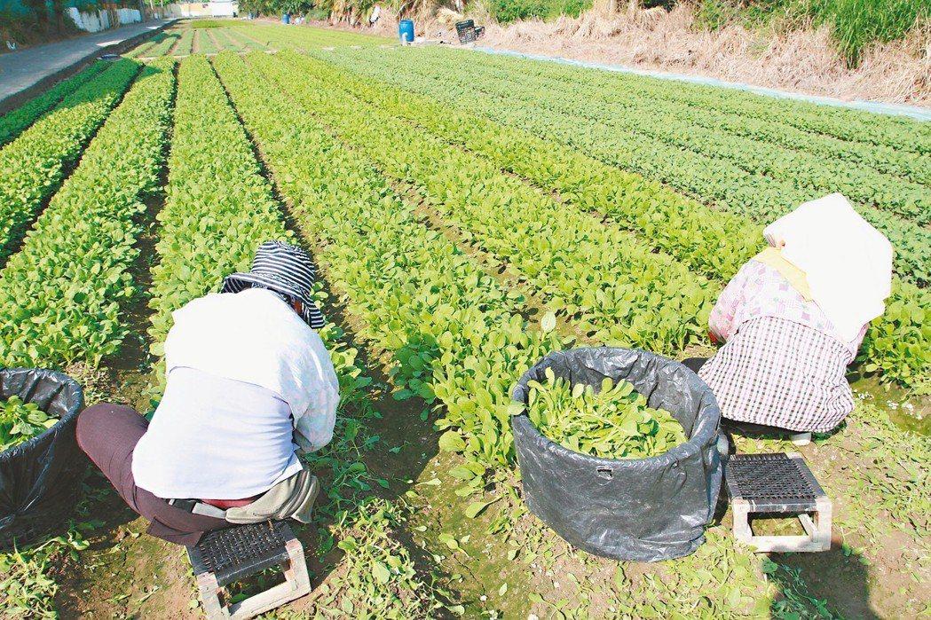 民進黨立委陳明文提案老農津貼調整從消費者物價指數(CPI)改為經濟成長率(GDP...