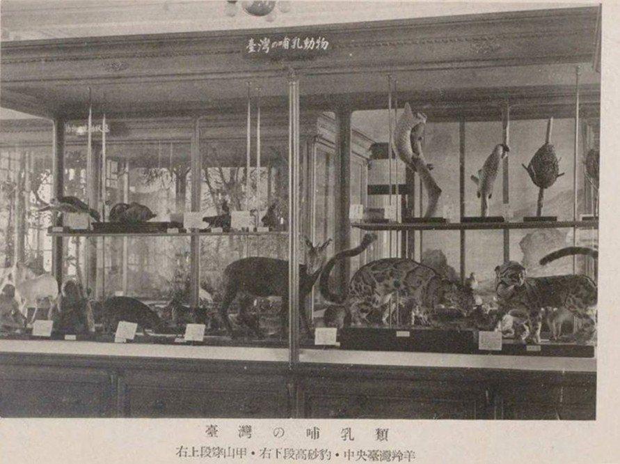 1937年台灣總督府博物館展示的「台灣的哺乳類」。 圖/作者提供,取自《台灣總督府博物館案內》,1937年出版。