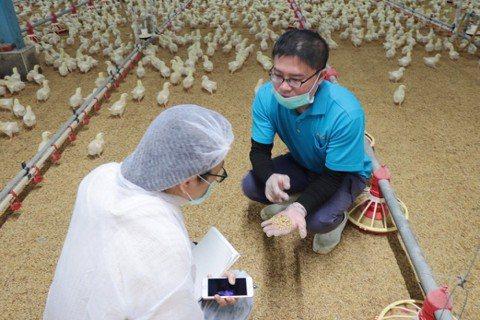 御正食品畜牧場場長黃勝裕解釋,他在飼料中添加益生菌,為的就是讓肉質鮮甜不腥味。攝...