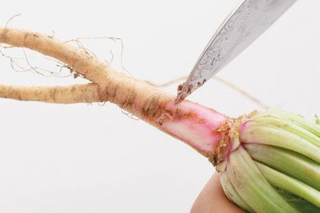 菠菜靠近根部1公分處營養價值最高。 圖/王正毅(台灣好食材提供)