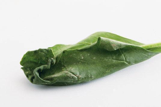 菠菜葉緣避免有發黃、枯萎、風傷現象,代表不新鮮。 圖/王正毅(台灣好食材提供...