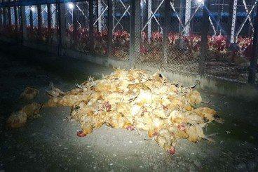 菜市場的法律學:刑事與民事的危「雞」解密