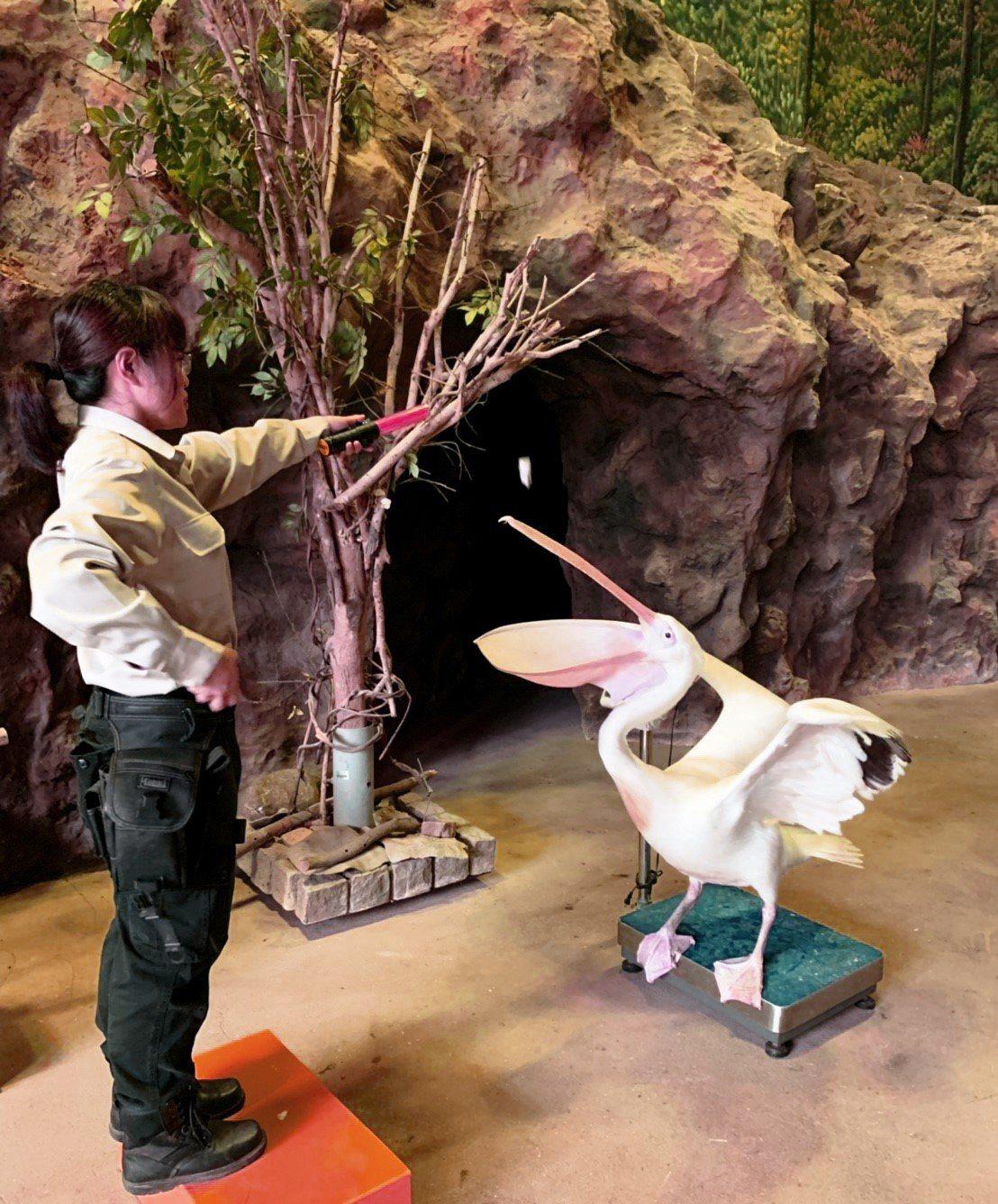 關西六福莊全新「鳥飛飛動物保育員」。圖/六福村提供