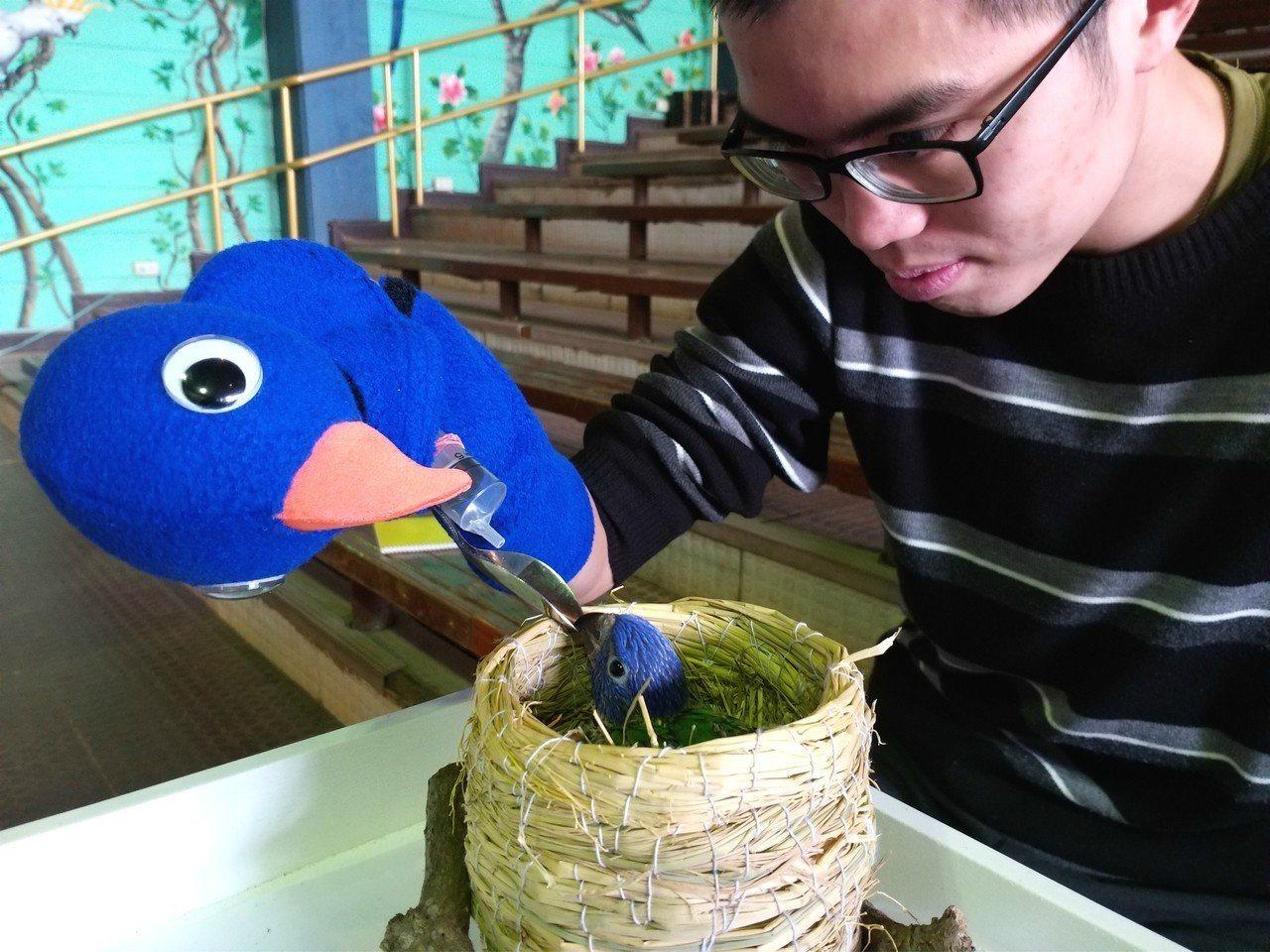 保育員可親手照顧剛出生的澳洲彩虹鸚鵡。圖/六福村提供
