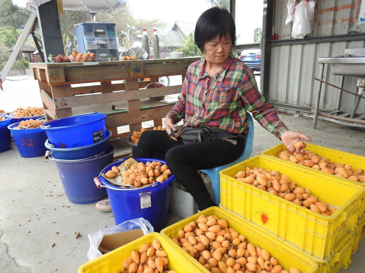 南投縣國姓枇杷今年因暖冬少雨,提早成熟且產量減少逾3成,果農提升品質來刺激買氣。...