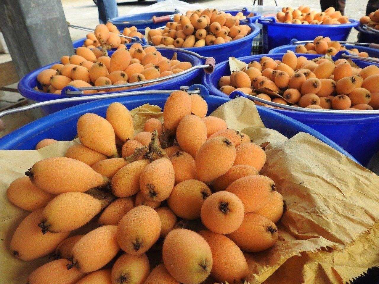 今年雖暖冬少雨,但南投縣國姓枇杷品質並未受太大影響,每斤價格從120至200元不...