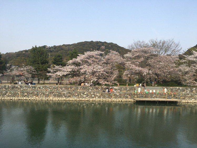 日本迎來賞櫻季,吸引許多台灣旅客。記者吳姿賢/攝影