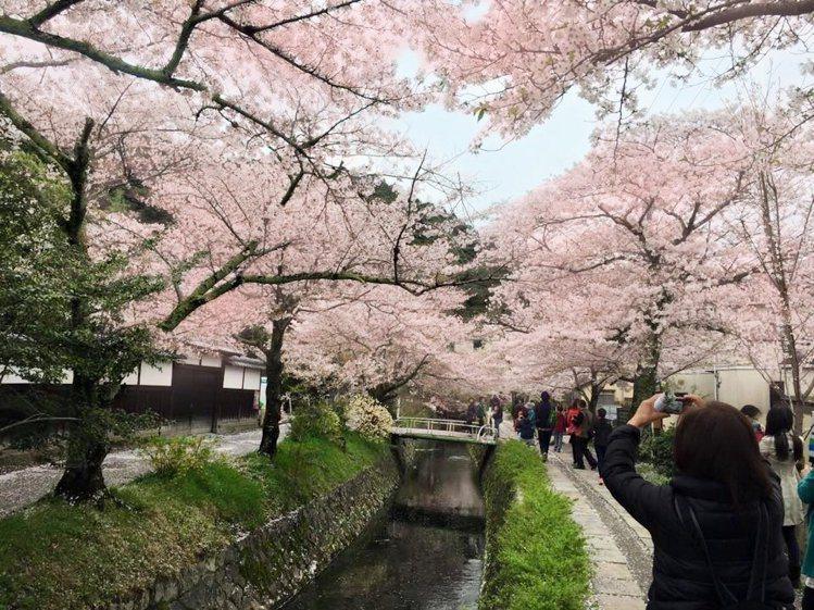 今年日本因櫻花季,及天皇退位、黃金周,以及增加3項稅收,使得前往旅遊團費調漲。圖...