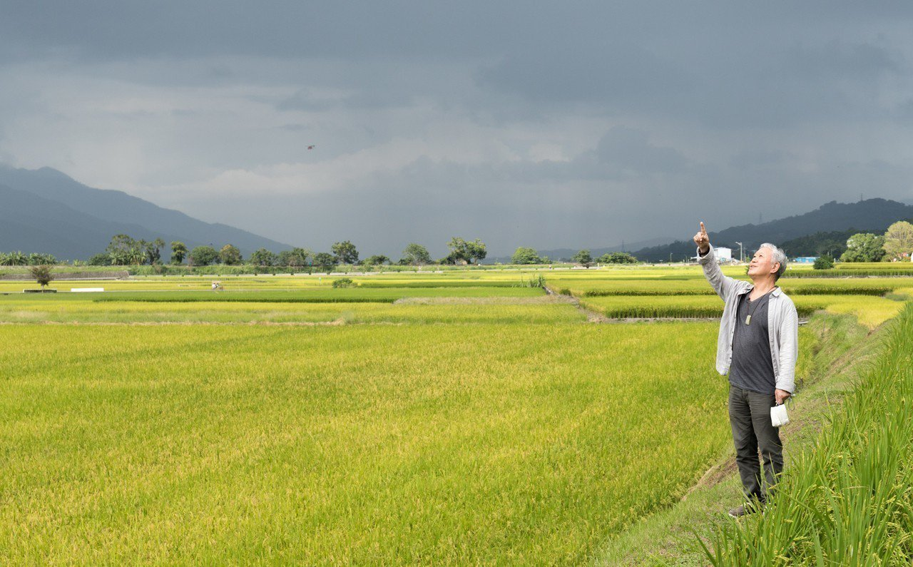 蔣勳漫步在池上的田中央,感受自然之美。記者陳立凱/攝影
