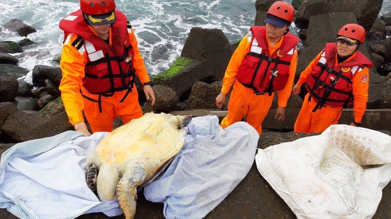 和美漁港消波塊發現一隻死亡綠蠵龜,疑似迷航、體力不支死亡。圖/第二岸巡隊提供