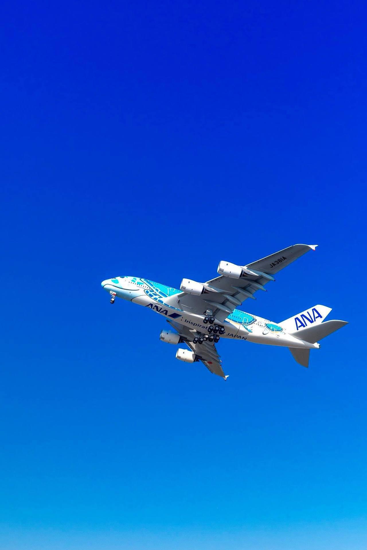 5月24日以後就可以看到海龜機在天空翱翔模樣。圖/摘自ANA全球粉絲專頁