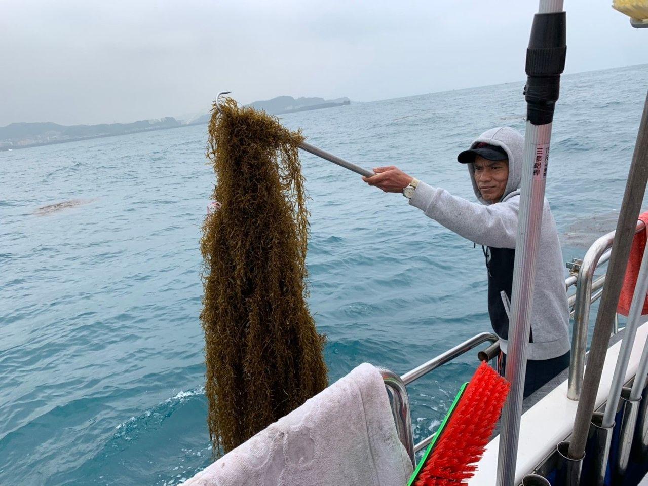 日本秋田縣馬尾藻食品製造業,因近年來日本海域的馬尾藻產量不足,得知台灣海域每年春...